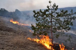 Image of a grassy field and trees on fire. Whoever started this fire is in desperate need of arson bonds.